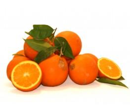 Naranja de Zumo por kg